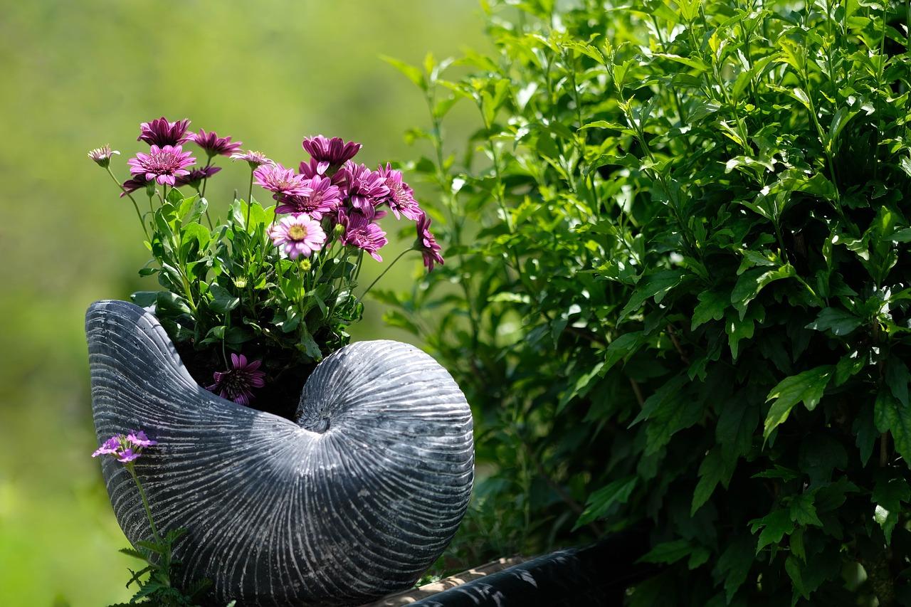 Photographie de fleurs dans une coquille d'escargot dans un jardin